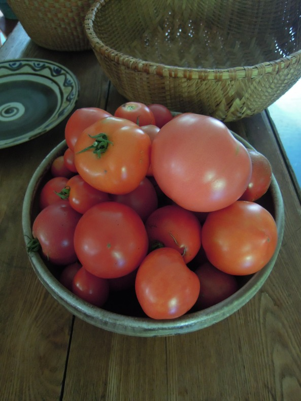 A few tomatoes brought in from the jungle