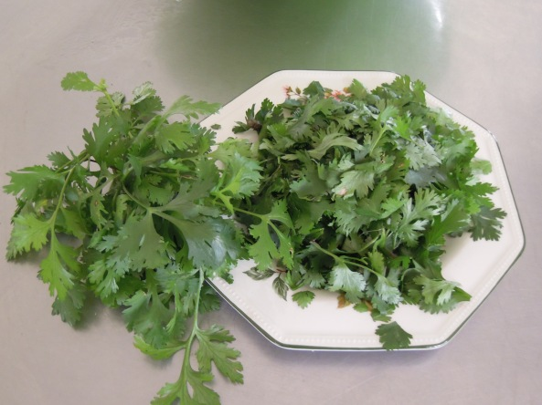 fresh cilantro from our gardens